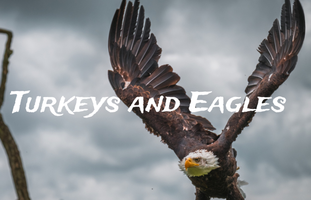 Turkjeys and Eagles