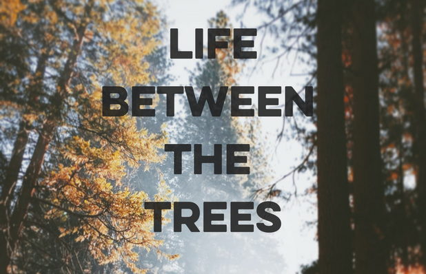 LifeBetween the trees