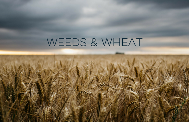 Weeds & Wheat