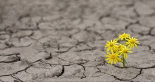 Flower in cracked soil- hope