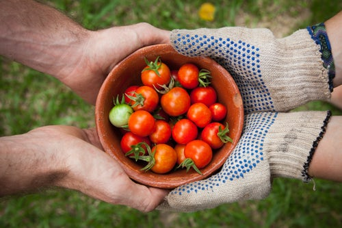 tomatoes image