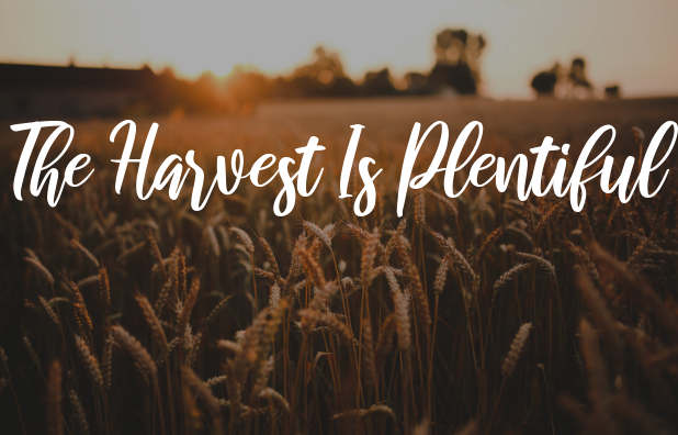 Harvest is plentiful blog