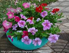 POTTED PETUNIAS image