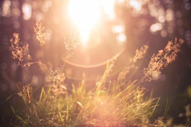 sun-shining-through-the-grass_385-19321352