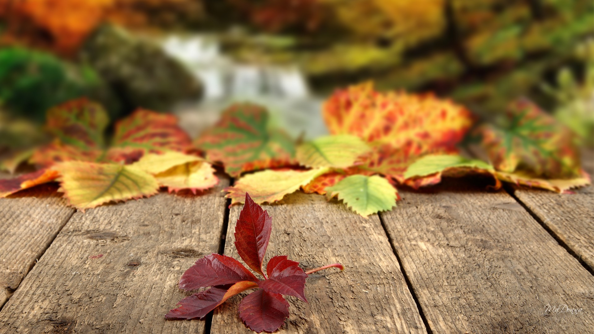 nature-landscapes_hdwallpaper_where-autumn-leaves-fall_13215 image