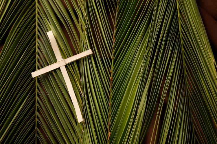 palm-sunday-usa image
