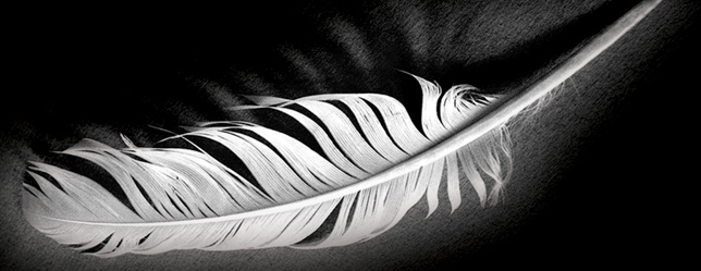 feather-header-image
