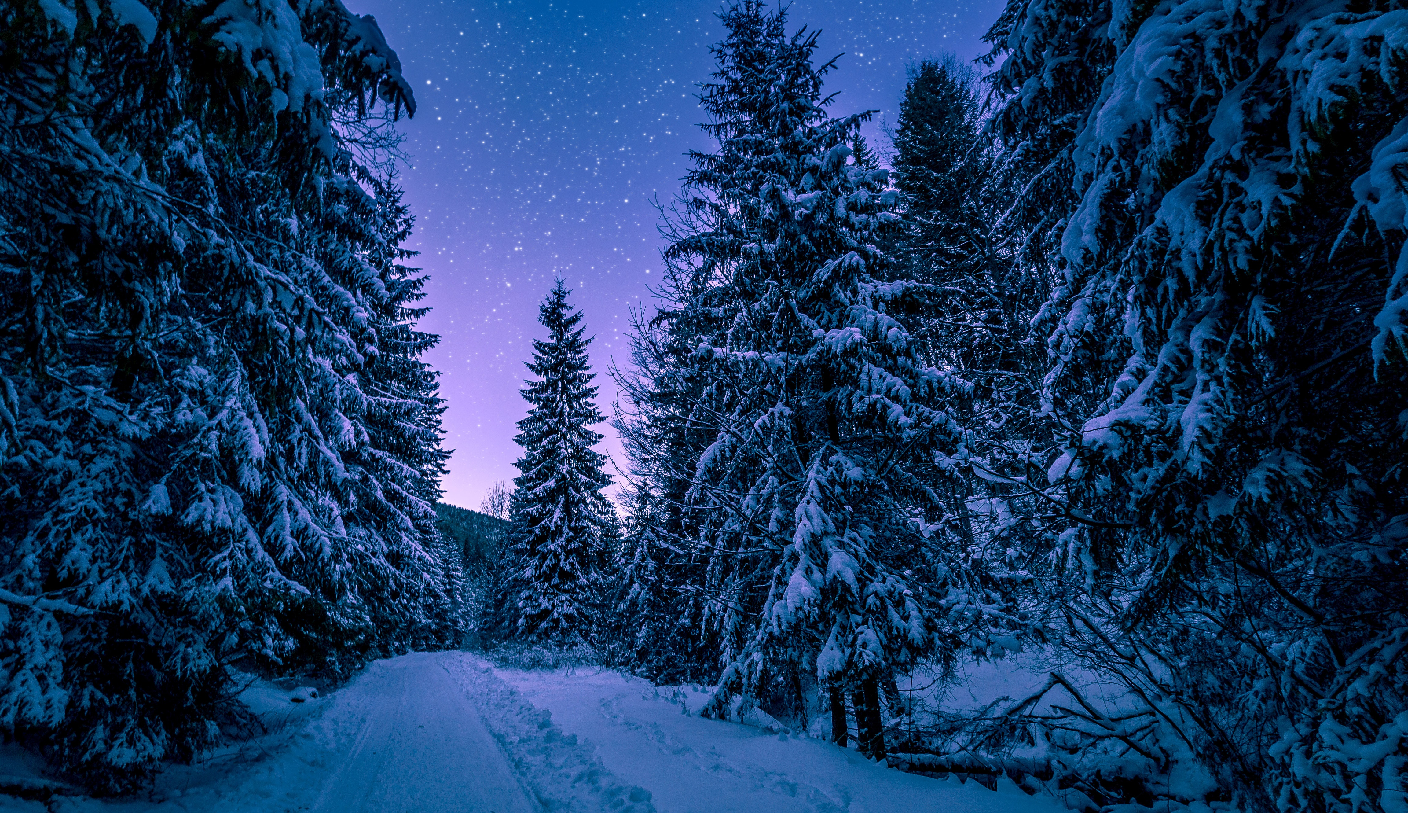 photography-of-trees-covered-with-snow-773594