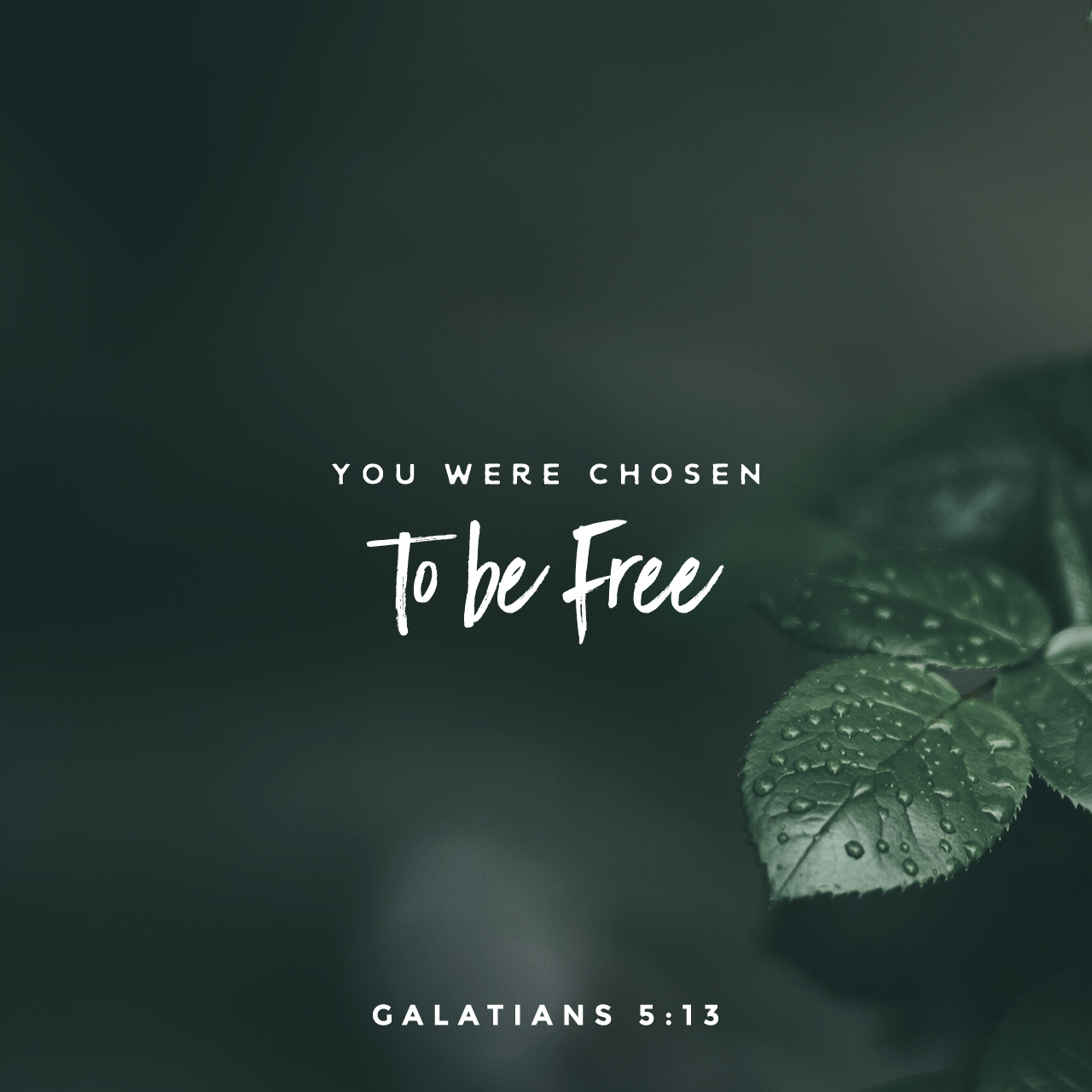 ScriptureArt_0817_-_Galatians_5_13_CEVUS06_English
