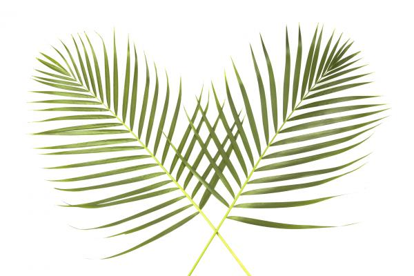 palm-sunday-global image