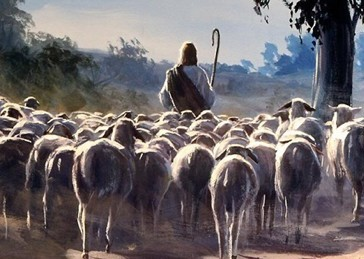 sheep-following-shepherd