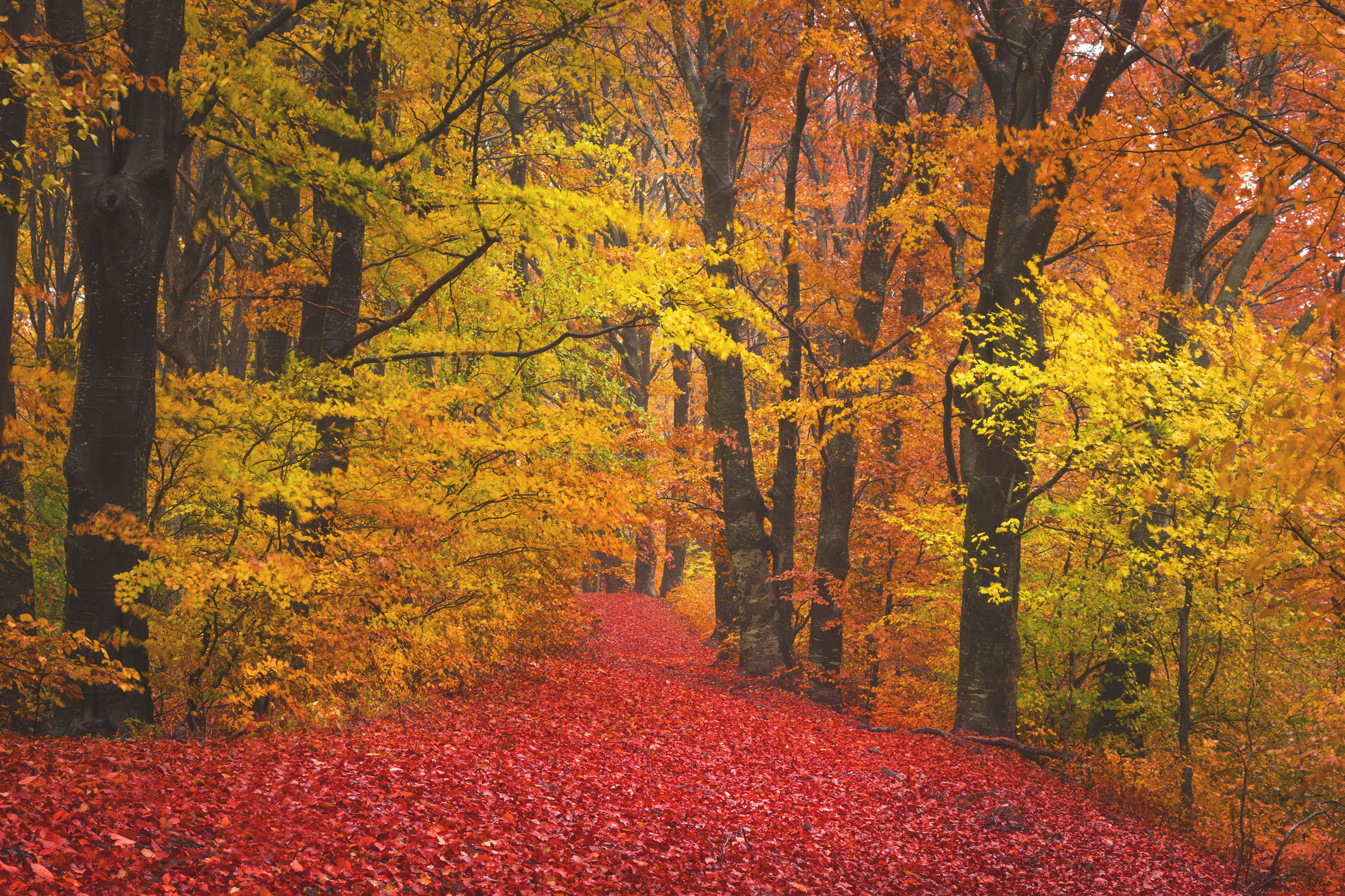 autumn-landscape-in-the-forest