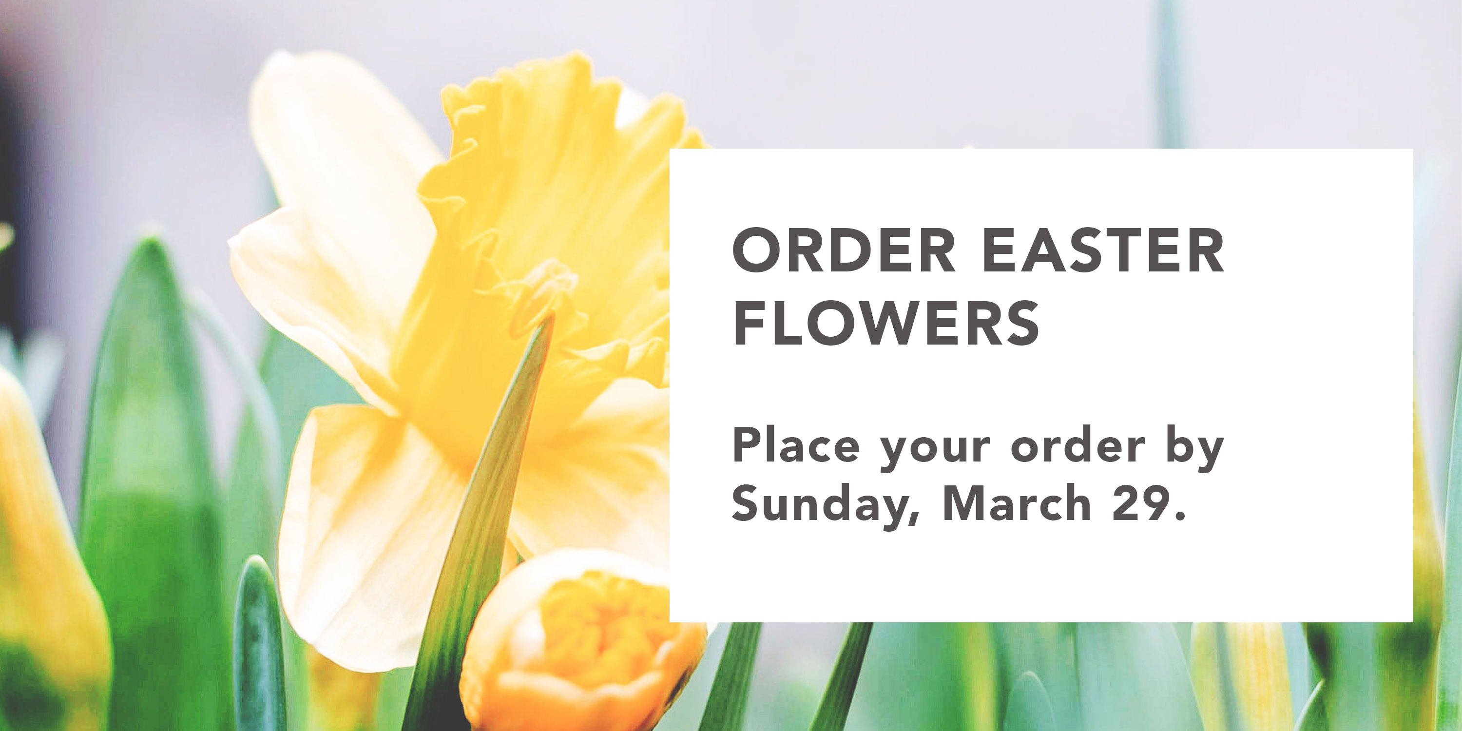 Easter-Flowers-Graphic