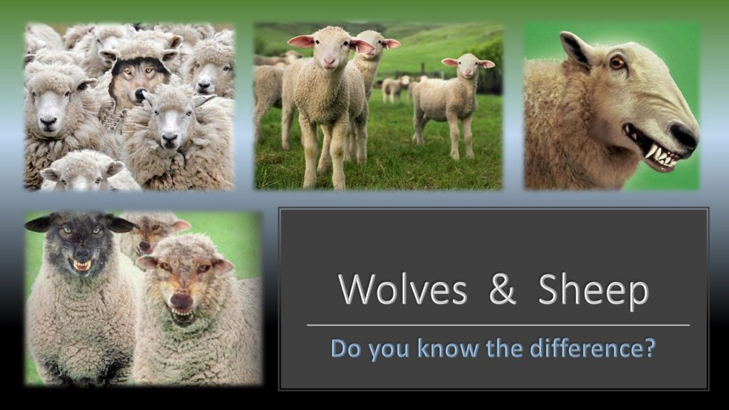 Wolves-Sheep-1024x576