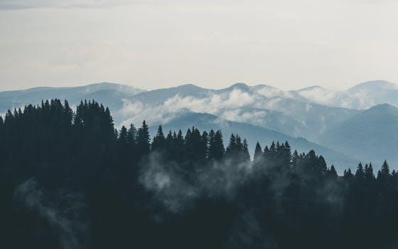 mountains-clouds-forest-fog image