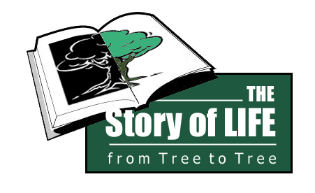 Story of Life Full Logo FINAL color copy image